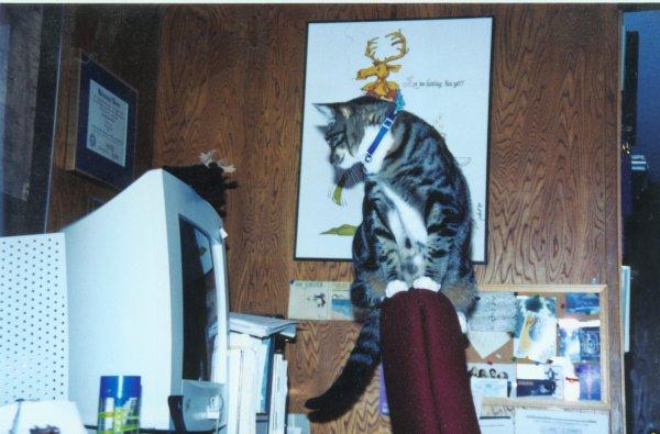 Zootie as a kitten